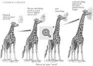 Teoria do Uso e Desuso